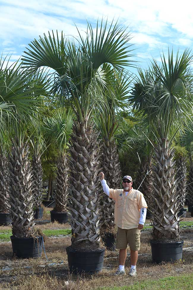 Wholesale Plant Nursery Florida Wholesale Growers
